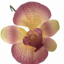 Orchidea - Lila