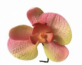 Orchidea - Rózsaszín - sárga
