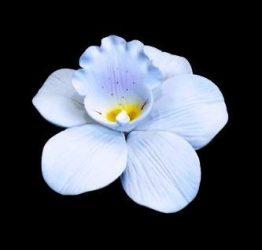 Orchidea - Fehér